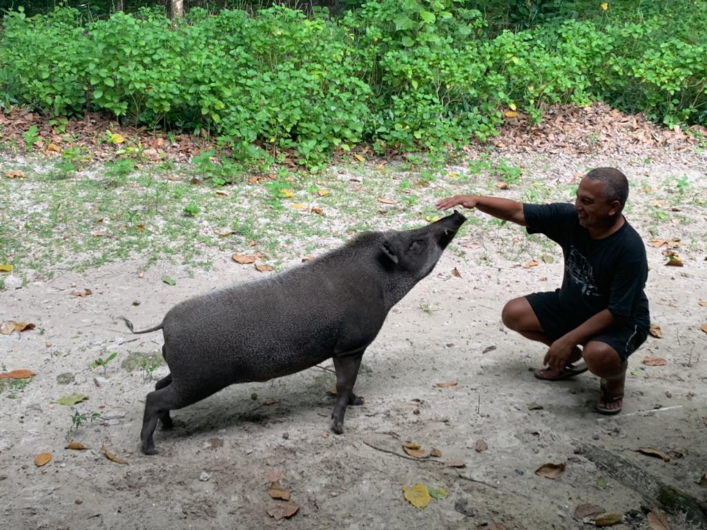 Staying Safe Around Wild Boar while Visiting Peucang Island